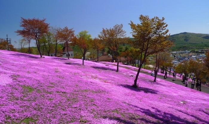 Интересные места, которые стоит посетить наХоккайдо