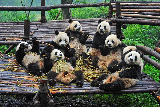 10 самых популярных туристических достопримечательностей Китая
