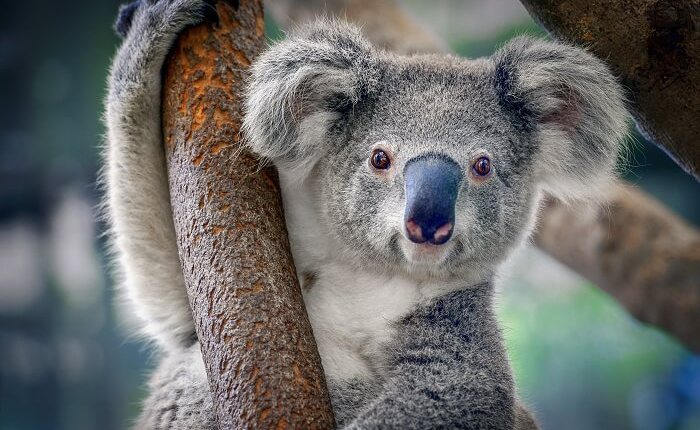 10 лучших мест для посещения в Брисбене(Австралия)