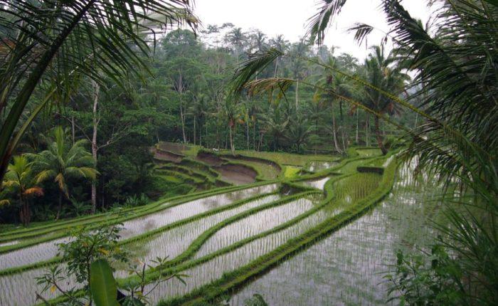 Что нужно обязательно сделать в Убуде(Бали)