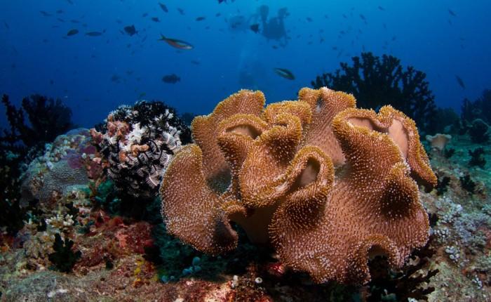 10 красивейших коралловых рифовмира